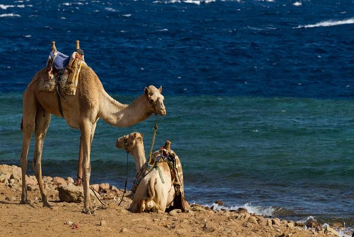 Верблюжий пляж