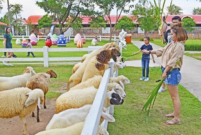 Ферма овечек и поселение слонов