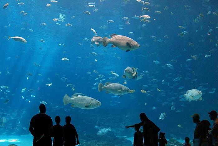 Океанариум Протараса