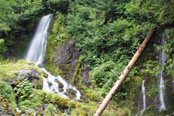 Птичий водопад