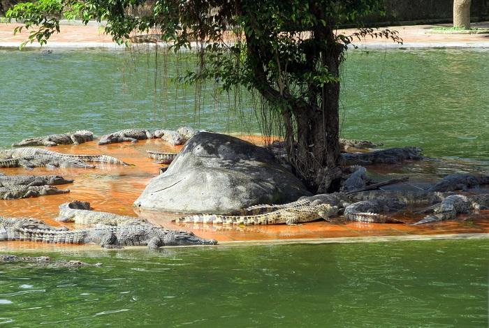 Экологический парк Янг Бэй