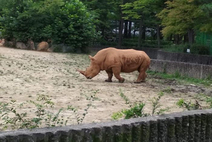 Зоопарк Seoul Grand Zoo
