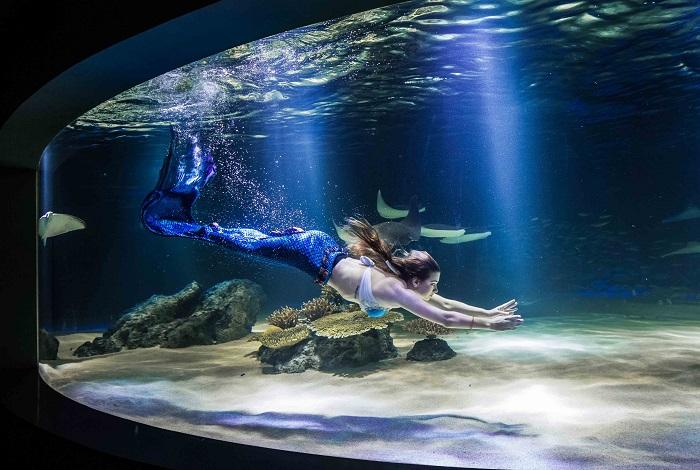 Аквариум 63 Sea World