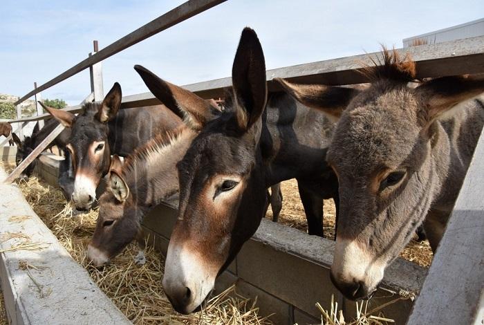 """Ферма осликов """"Golden Donkeys"""""""