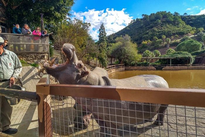 Зоопарк Selwo Aventura