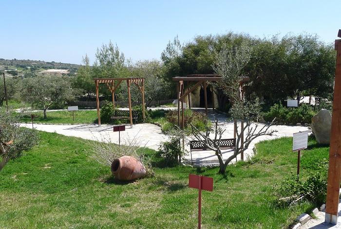Оливковый парк и музей Oleastro