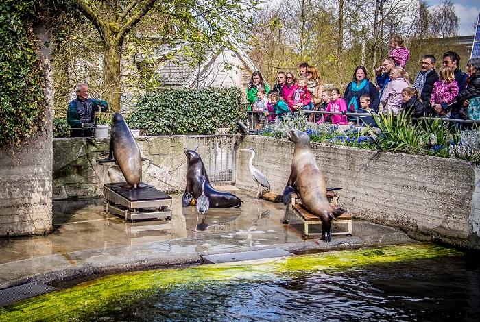 Зоопарк ARTIS