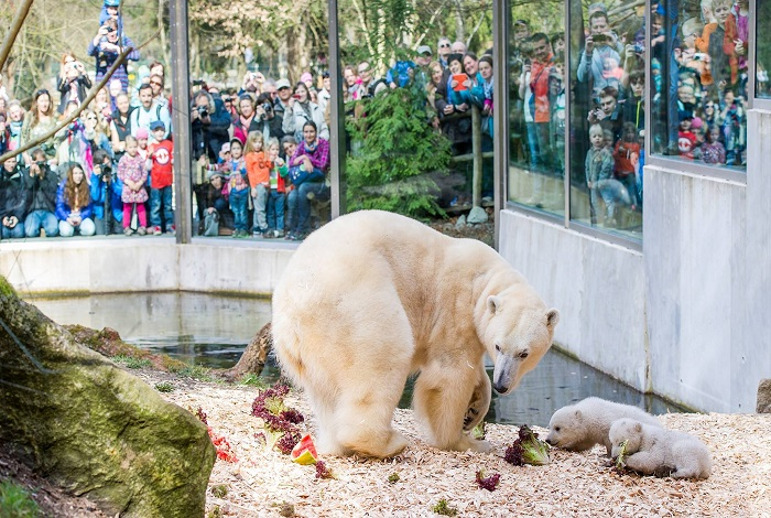 Мюнхенский зоопарк «Хеллабрунн»