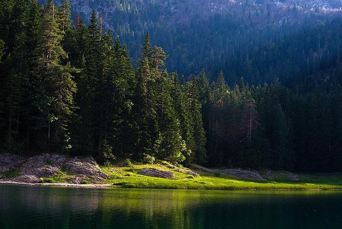 Леса Черных гор